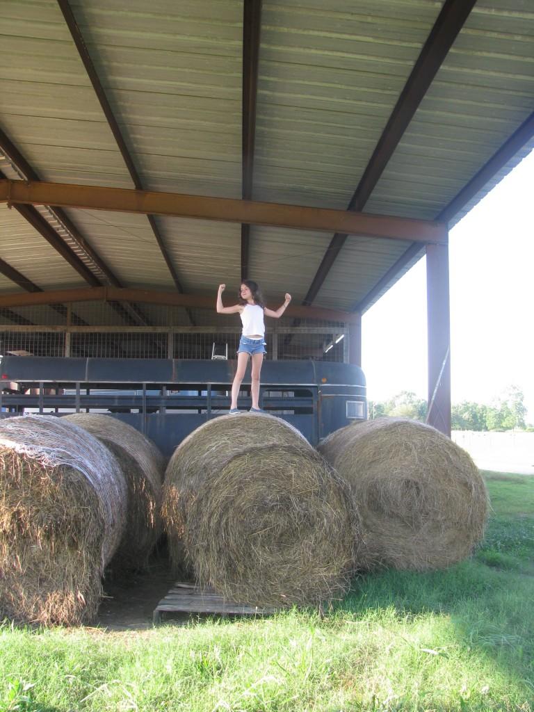 First cutting hay