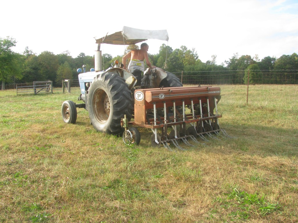 Planting clover and legumes