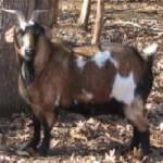 Onion Creek Ranch Carlie